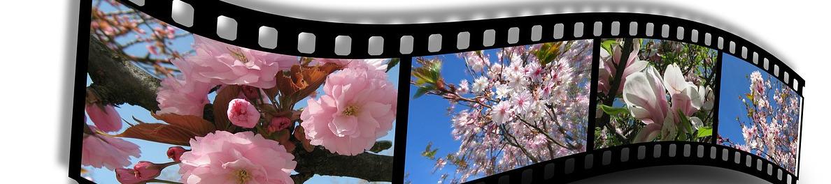 films archiveren (Youtube)